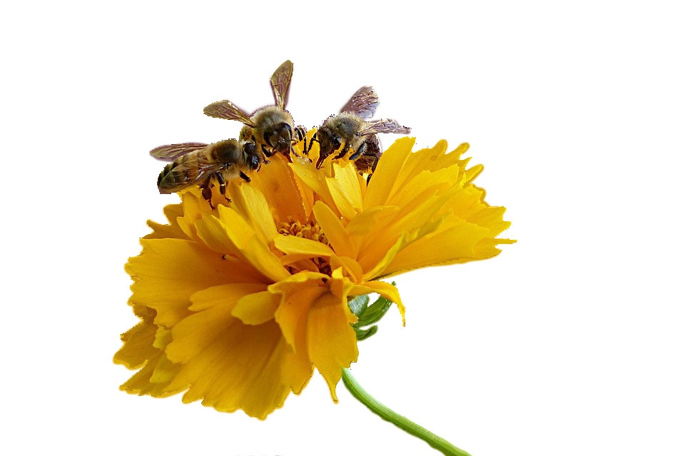 Forex bees